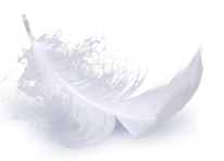 Feather_BKG_01_s
